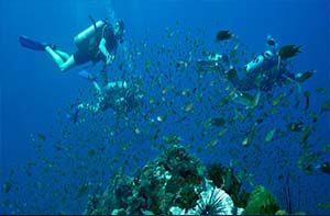 Muck Diving Lembongan