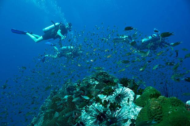 eco-friendly-divers