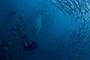 Wreck Diving Lembongan