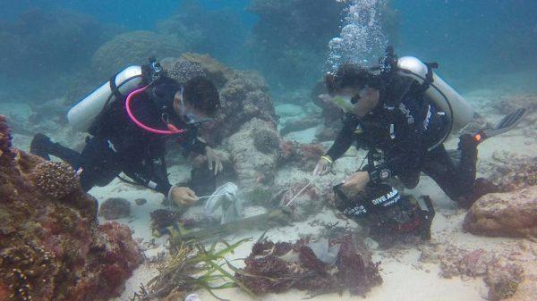 underwater clean up dive scuba center asia
