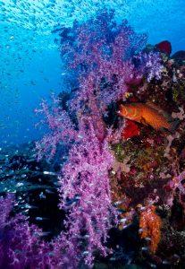 nusa penida scuba diving scuba center asia