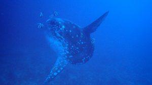 Mola Mola diving Scuba Center Asia