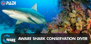 AWARE shark conservation specialty course