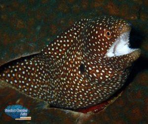 moray eel lembongan