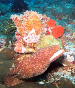 marine life in nusa lembongan