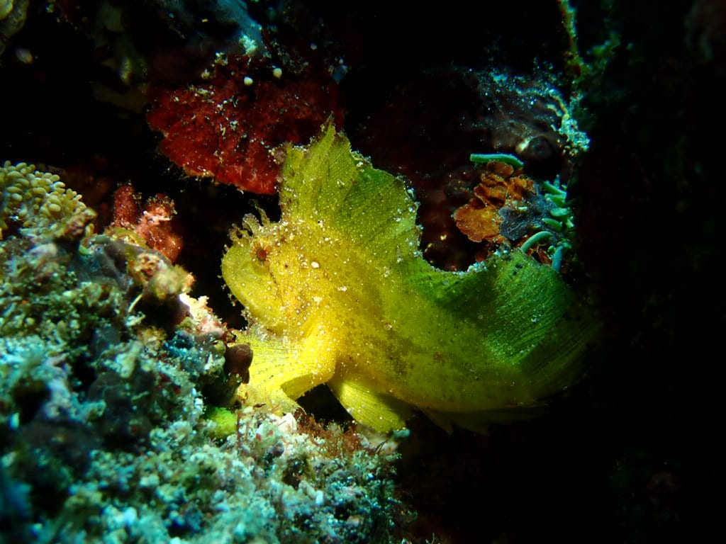 Female divers often travel to Nusa Lembongan for beautiful diving and friendly atmospheres